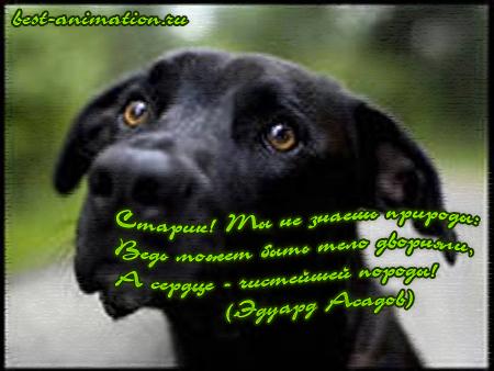Картинки со стихами о Любви Собака