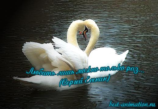 Картинки со стихами о Любви Лебеди
