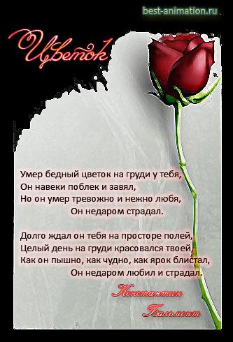 Картинки со стихами о Несчастной любви Цветок