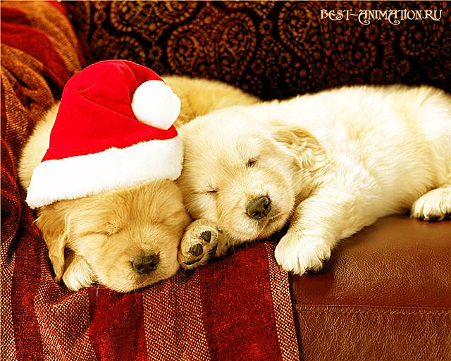 Поздравить друзей, любимых, родных С Новым Годом Синей Козы Сон