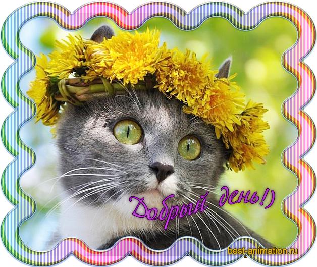 Открытка с пожеланием Добрый день Кот