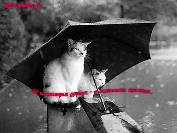 Открытка О дружбе Коты