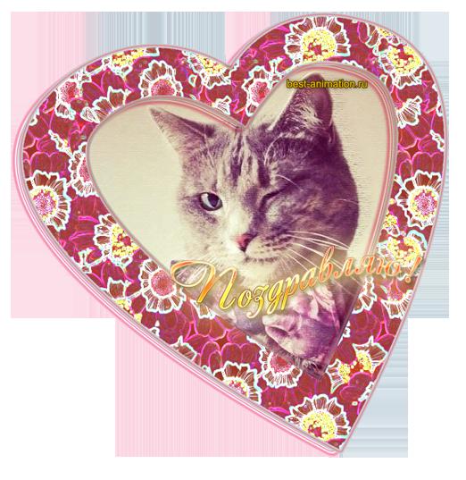 Открытка Поздравляю Кот