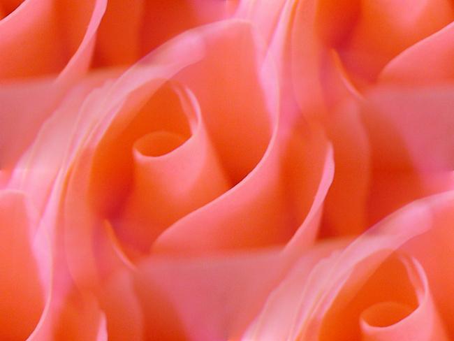 Картинка на День Всех Влюбленных Цветок