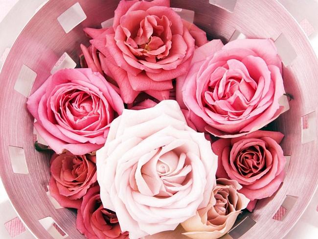 Картинка на День Всех Влюбленных Роза