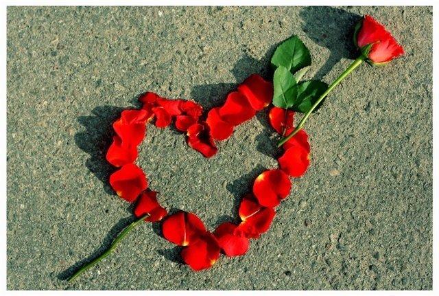Картинка на День Всех Влюбленных Красная роза