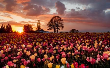Рассвет в поле, стихи о жизни Анны Купровской