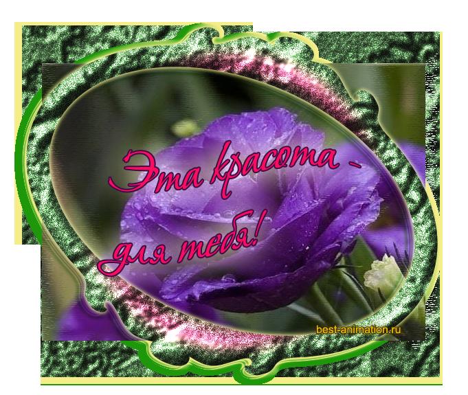 Картинки открытки цветы для тебя